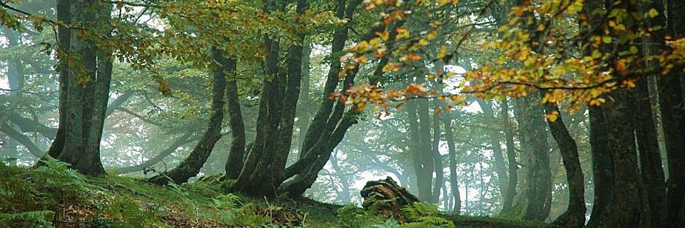 La belleza de los bosques en Asturias - foto de elembarcadero.es