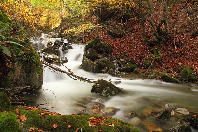 asturias-ruta-del-oso-teverga-stream-in-an-autumnal-beech-forest-spain